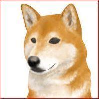 20111118 柴犬フリー画像.JPG